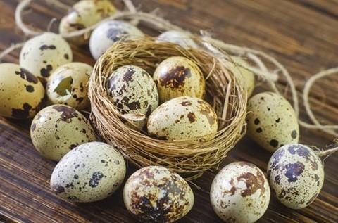 Người Nhật Bản rất chuộng ăn trứng chim cút vì 10 lợi ích nhãn tiền này - Ảnh 2.