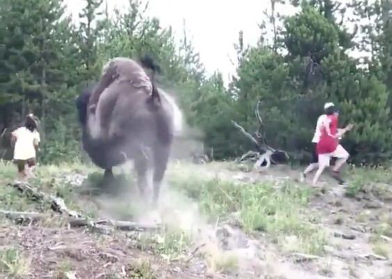 Clip gây sốc: Đi chơi công viên cùng gia đình, bé gái bị bò rừng tấn công, bố mẹ chỉ biết bỏ chạy thoát thân - Ảnh 1.