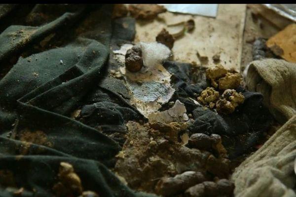 Hãi hùng trước căn nhà ngập ngụa rác, không hề lau dọn suốt 5 năm trời - Ảnh 1.