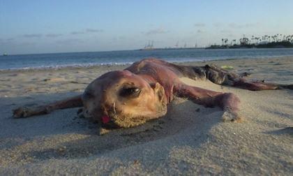 Sự tồn tại của những loài quái vật biển kì dị, chẳng ai muốn gặp dù chỉ một lần - Ảnh 4.