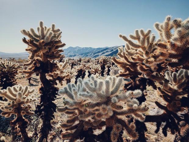 Ngắm nhìn Top ảnh giật giải chụp iPhone khủng nhất 2019: Tuyệt đỉnh từ cả hình thức lẫn nội dung - Ảnh 9.