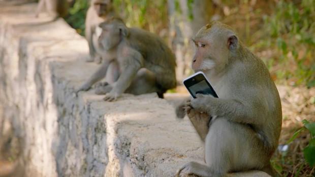 """Du lịch Bali và hàng loạt hiểm nguy rình rập du khách: Sóng """"tử thần"""", khỉ """"cướp giật"""" và đặc biệt là điều cuối cùng! - Ảnh 14."""