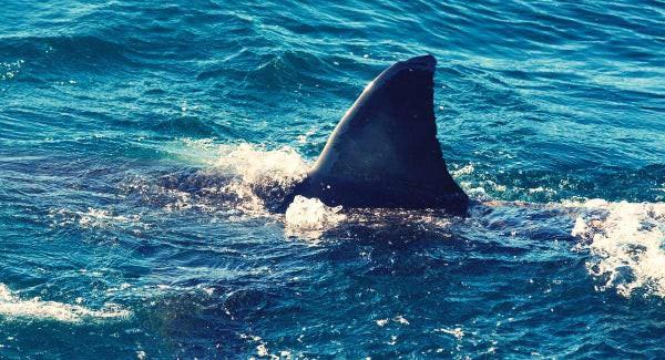 Chụp ảnh drone trên biển, ông bố phát hiện mối hiểm họa chỉ cách vài mét và bắt các con chạy lên bờ ngay lập tức - Ảnh 4.