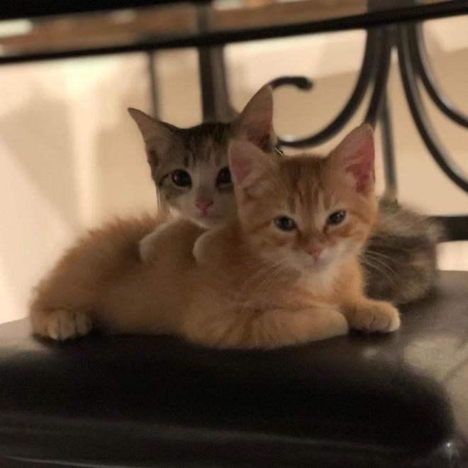 Công ty thuê hai chú mèo đáng yêu để giúp lập trình viên bớt căng thẳng, tăng cường tinh thần làm việc - Ảnh 1.
