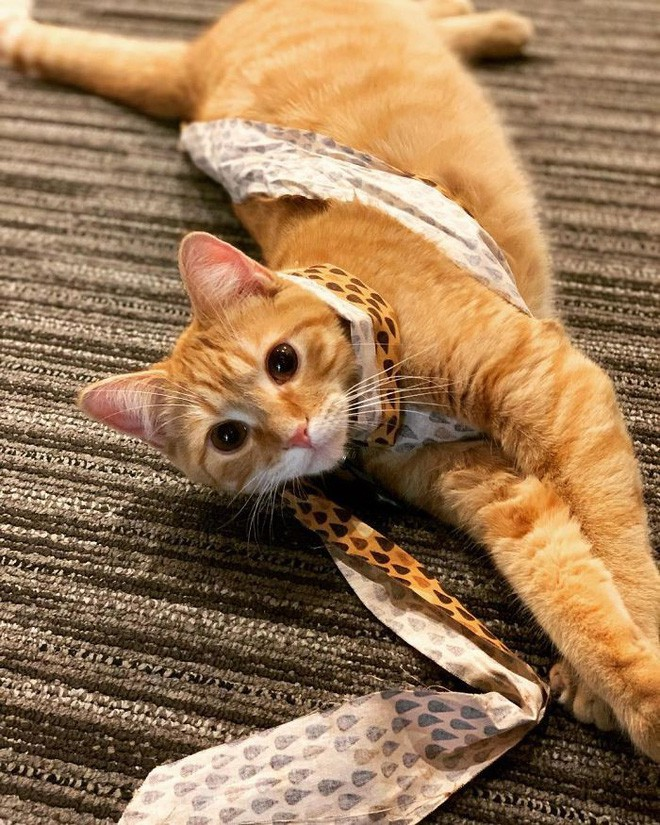 Công ty thuê hai chú mèo đáng yêu để giúp lập trình viên bớt căng thẳng, tăng cường tinh thần làm việc - Ảnh 14.
