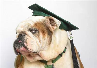 Mải mê chụp ảnh với đám bạn, nữ sinh vô ý bị chú chó Bull Anh cắn rách bằng tốt nghiệp - Ảnh 5.