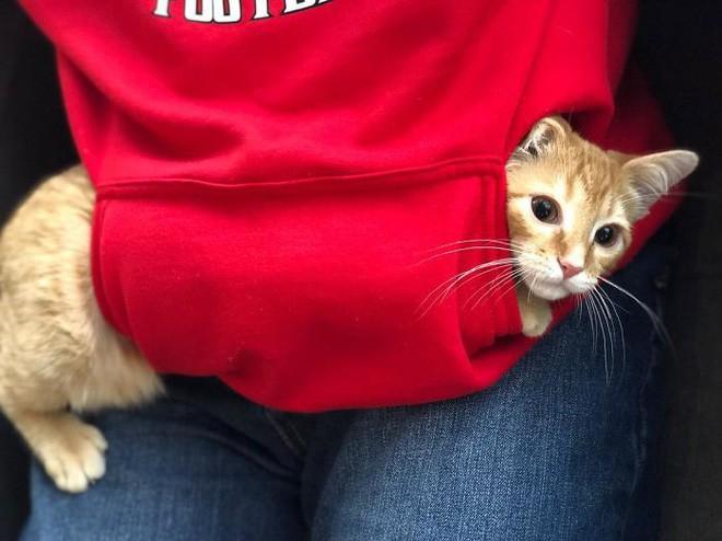 Công ty thuê hai chú mèo đáng yêu để giúp lập trình viên bớt căng thẳng, tăng cường tinh thần làm việc - Ảnh 7.
