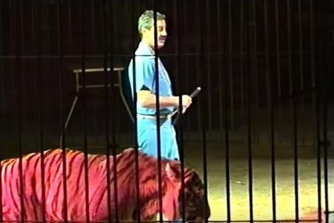 Nhà huấn luyện thú nổi tiếng thế giới bị 4 con hổ vồ chết, đồng nghiệp đứng nhìn 30 phút mà không thể cứu được - Ảnh 3.