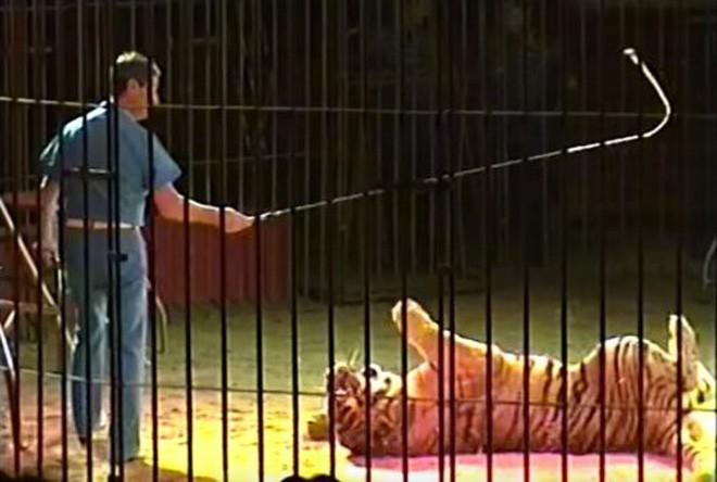 Nhà huấn luyện thú nổi tiếng thế giới bị 4 con hổ vồ chết, đồng nghiệp đứng nhìn 30 phút mà không thể cứu được - Ảnh 4.