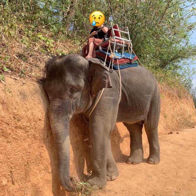 Cô gái Việt chia sẻ hình ảnh chú voi mệt lả tựa vào vách đất, tự hứa sẽ không dùng dịch vụ này nữa - Ảnh 1.