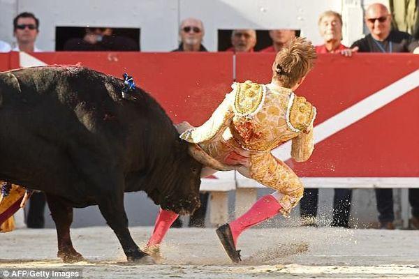 Bị bò tót hất tung lên không trung, du khách sống sót thần kỳ - Ảnh 2.