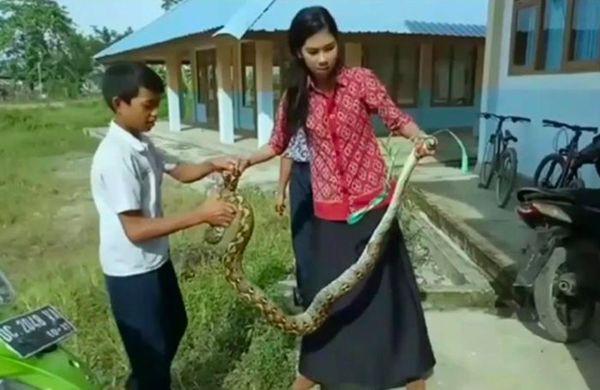 Với sự giúp đỡ của các thầy cô khác và một số học sinh dũng cảm, cô Ayu đã buộc gọn miệng của con trăn dài.