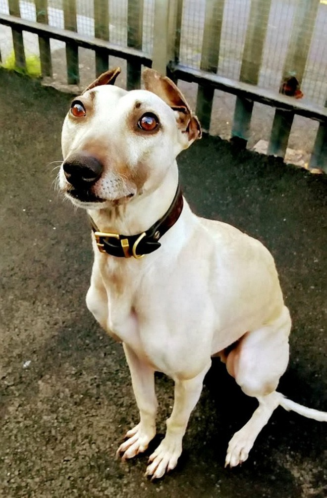 900 ngày cô đơn mỏi mòn chờ đợi người chủ định mệnh của chú chó bất hạnh từng 3 lần bị bỏ rơi - Ảnh 3.