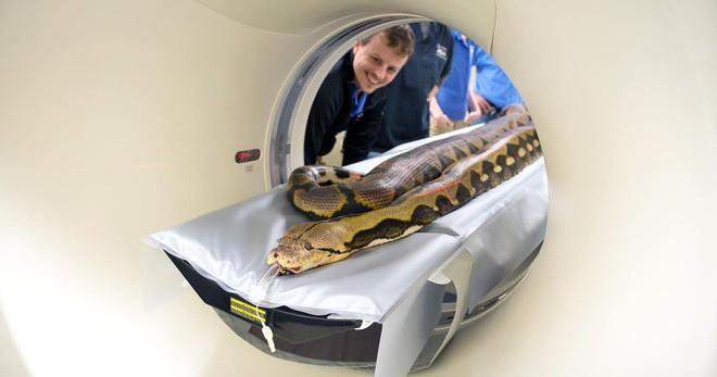 Khi bé Na và bạn bè đi chụp CT: Máu mặt như chúa sơn lâm hay nguy hiểm như báo cũng phải cúp đuôi ngoan ngoãn nghe lời bác sĩ - Ảnh 1.