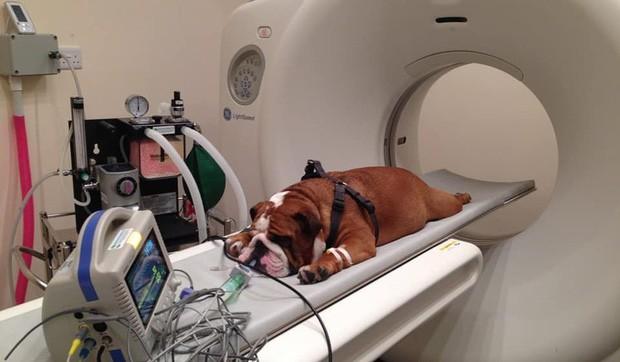 Khi bé Na và bạn bè đi chụp CT: Máu mặt như chúa sơn lâm hay nguy hiểm như báo cũng phải cúp đuôi ngoan ngoãn nghe lời bác sĩ - Ảnh 13.