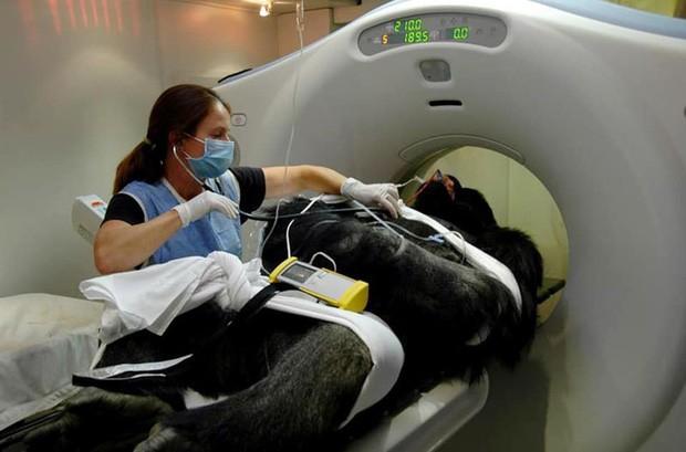 Khi bé Na và bạn bè đi chụp CT: Máu mặt như chúa sơn lâm hay nguy hiểm như báo cũng phải cúp đuôi ngoan ngoãn nghe lời bác sĩ - Ảnh 15.