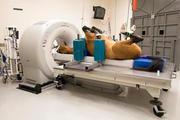 Khi bé Na và bạn bè đi chụp CT: Máu mặt như chúa sơn lâm hay nguy hiểm như báo cũng phải cúp đuôi ngoan ngoãn nghe lời bác sĩ - Ảnh 16.