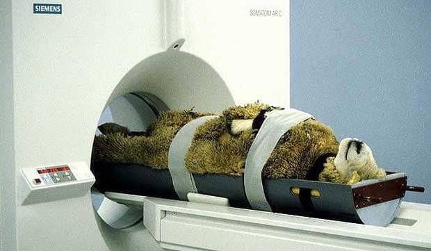 Khi bé Na và bạn bè đi chụp CT: Máu mặt như chúa sơn lâm hay nguy hiểm như báo cũng phải cúp đuôi ngoan ngoãn nghe lời bác sĩ - Ảnh 5.