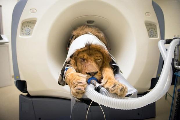 Khi bé Na và bạn bè đi chụp CT: Máu mặt như chúa sơn lâm hay nguy hiểm như báo cũng phải cúp đuôi ngoan ngoãn nghe lời bác sĩ - Ảnh 8.