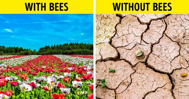 Ong mật trên thế giới đang có nguy cơ tuyệt chủng cực lớn và đây là lý do chúng ta không thể để điều đó xảy ra - Ảnh 1.