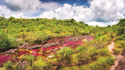 """Độc đáo """"dòng sông 5 màu"""" ở Colombia - Ảnh 1."""