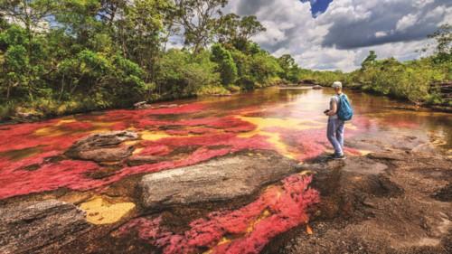"""Độc đáo """"dòng sông 5 màu"""" ở Colombia - Ảnh 3."""