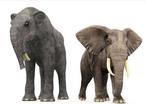 Có thể bạn chưa biết, tổ tiên của voi và tê giác cổ đại có vẻ ngoài quái dị hơn ngày nay nhiều! - Ảnh 1.