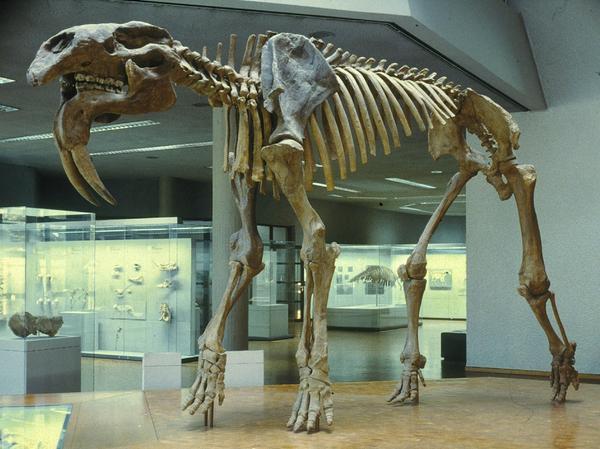 Có thể bạn chưa biết, tổ tiên của voi và tê giác cổ đại có vẻ ngoài quái dị hơn ngày nay nhiều! - Ảnh 3.