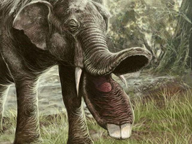 Có thể bạn chưa biết, tổ tiên của voi và tê giác cổ đại có vẻ ngoài quái dị hơn ngày nay nhiều! - Ảnh 5.