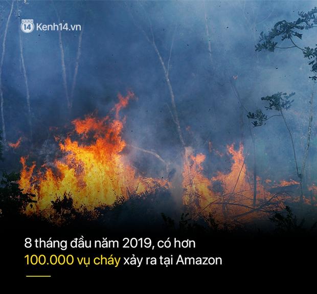 Tình hình cháy rừng tại Amazon đang trầm trọng đến mức nào: 8 tháng 100.000 vụ cháy, thảm họa ở tầm cỡ địa cầu - Ảnh 3.
