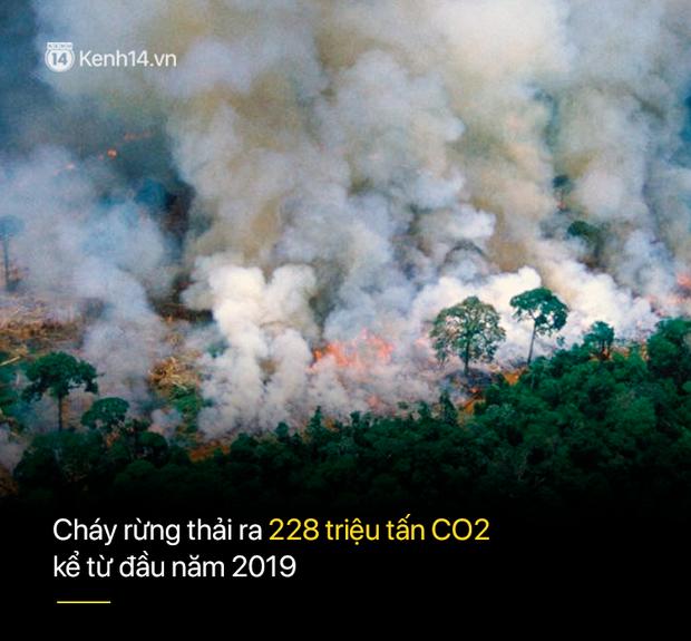 Tình hình cháy rừng tại Amazon đang trầm trọng đến mức nào: 8 tháng 100.000 vụ cháy, thảm họa ở tầm cỡ địa cầu - Ảnh 4.