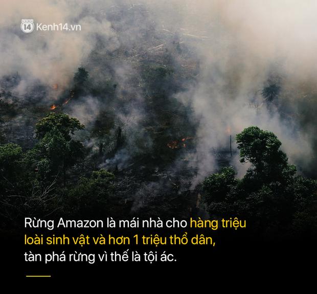 Tình hình cháy rừng tại Amazon đang trầm trọng đến mức nào: 8 tháng 100.000 vụ cháy, thảm họa ở tầm cỡ địa cầu - Ảnh 8.