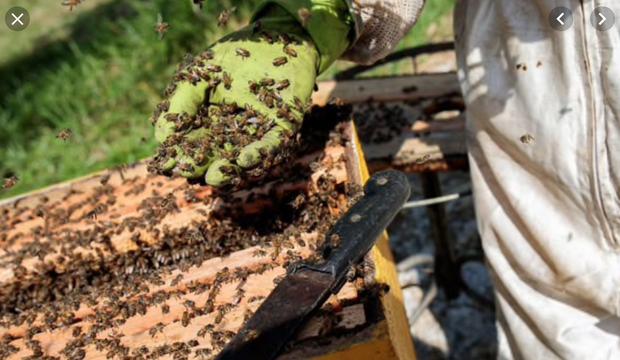 Hơn NỬA TỶ con ong đã chết rụng xác ở Brazil: Bi kịch thực sự của loài ong, sắp bước vào giai đoạn tuyệt chủng - Ảnh 2.