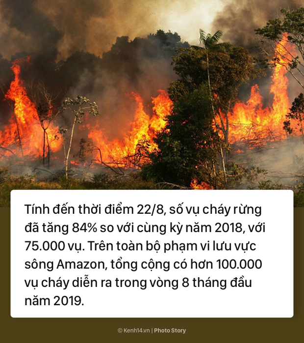 Toàn cảnh thảm hoạ cháy rừng Amazon khiến cả thế giới bàng hoàng - Ảnh 2.