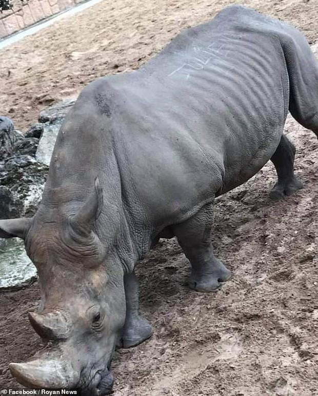 Hai du khách gây phẫn nộ khi vô tư khắc tên mình lên lưng tê giác trong vườn thú - Ảnh 1.