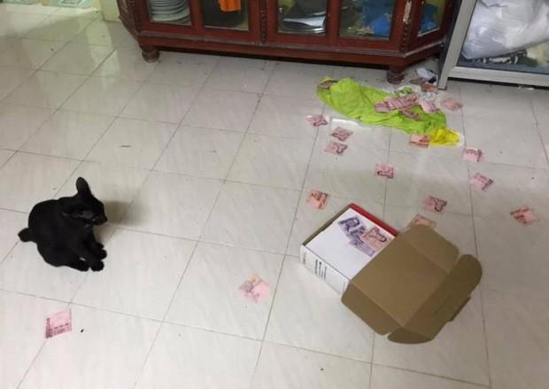 Người phụ nữ tìm ra quỹ đen của chồng nhờ hành động vô tình của Boss khiến dân mạng phát cuồng đua nhau đòi nuôi mèo - Ảnh 1.