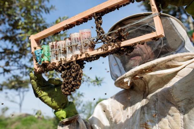 Hơn NỬA TỶ con ong đã chết rụng xác ở Brazil: Bi kịch thực sự của loài ong, sắp bước vào giai đoạn tuyệt chủng - Ảnh 3.
