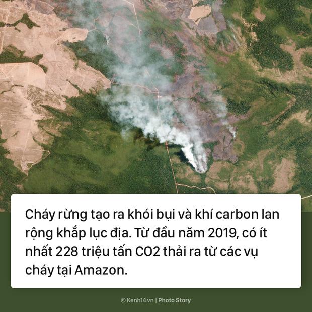 Toàn cảnh thảm hoạ cháy rừng Amazon khiến cả thế giới bàng hoàng - Ảnh 3.