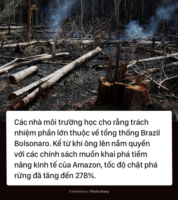 Toàn cảnh thảm hoạ cháy rừng Amazon khiến cả thế giới bàng hoàng - Ảnh 6.