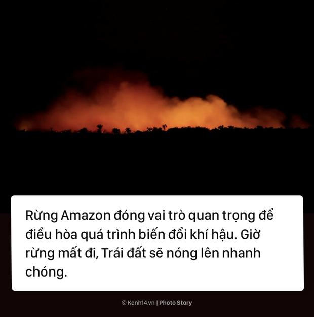 Toàn cảnh thảm hoạ cháy rừng Amazon khiến cả thế giới bàng hoàng - Ảnh 7.