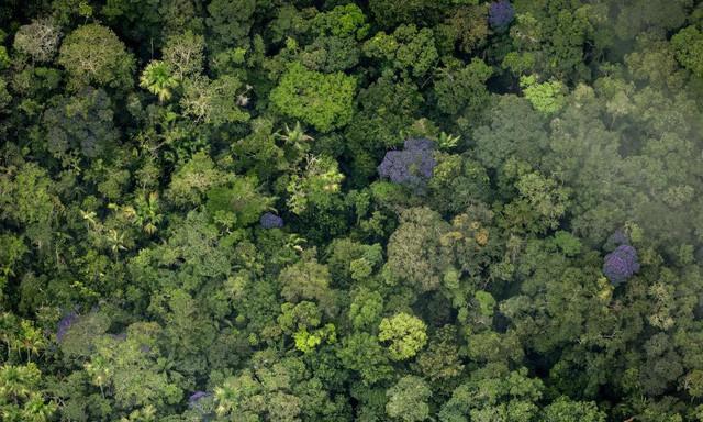 Nếu rừng Amazon biến mất, thế giới mất đi 20% lượng nước ngọt, 20% lượng oxy, con người chịu ảnh hưởng trực tiếp - Ảnh 4.