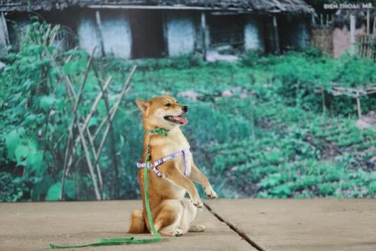 Vì sao chú chó Shiba được lựa chọn vào nhân vật ám ảnh nhiều thế hệ học sinh Việt Nam? - Ảnh 4.