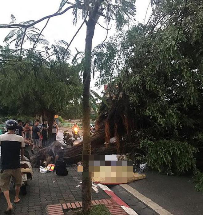 Mưa giông dữ dội từ cuối chiều ở Hà Nội, 1 nam thanh niên bị cây si đổ trúng tử vong - Ảnh 1.