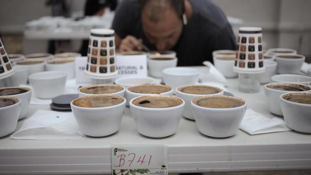 Đằng sau cái giá 41 triệu đồng/kg của vàng đen Elida Geisha: Loại cafe cực khó chăm, chỉ ngon nếu trồng ở một loại đất đặc biệt - Ảnh 3.