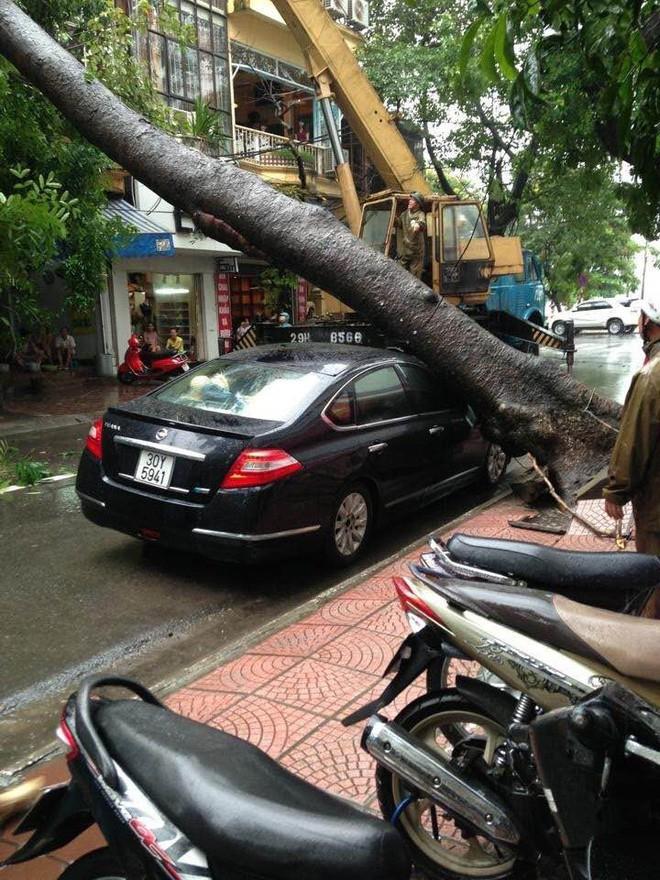 Cây đổ hàng loạt, đè trúng ô tô, hiện trường tan hoang ở Hà Nội và các tỉnh phía Bắc khi bão số 3 quét qua - Ảnh 7.