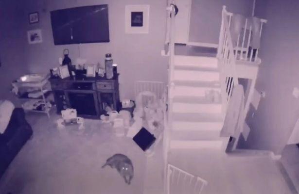 Mỹ: Camera an ninh bắt gặp cảnh 2 bóng ma chơi đùa với nhau - Ảnh 2.