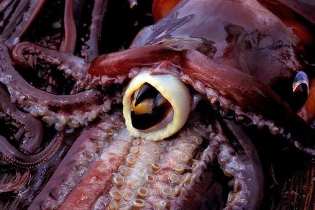 Chụp ảnh sống ảo với bạch tuộc, chị ngư dân bị cắn 2 phát đầy uy lực khiến khuôn mặt chảy máu và sưng tấy suốt 2 tháng - Ảnh 4.