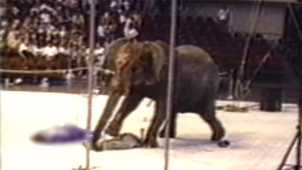 Tyke chú voi nổi loạn: Từ 20 năm bị bức ép đến lần gây tai họa cuối cùng và cái chết bi thảm làm rúng động ngành xiếc thú - Ảnh 4.