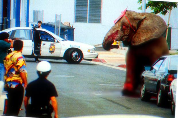 Tyke chú voi nổi loạn: Từ 20 năm bị bức ép đến lần gây tai họa cuối cùng và cái chết bi thảm làm rúng động ngành xiếc thú - Ảnh 7.