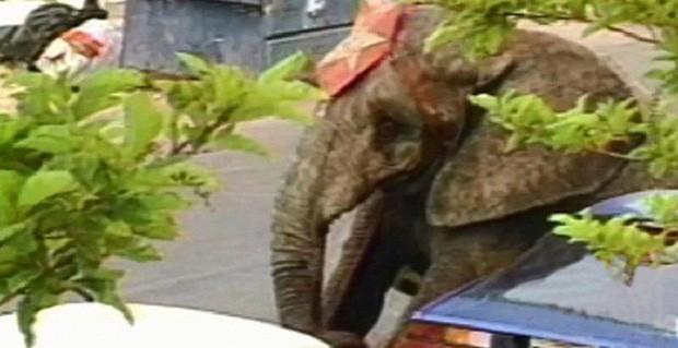 Tyke chú voi nổi loạn: Từ 20 năm bị bức ép đến lần gây tai họa cuối cùng và cái chết bi thảm làm rúng động ngành xiếc thú - Ảnh 8.